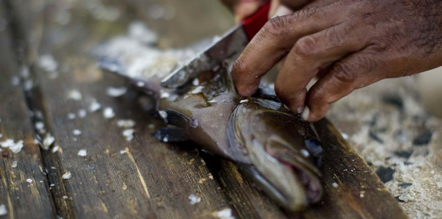 Continúa alerta sanitaria por parásito presente en el pescado crudo